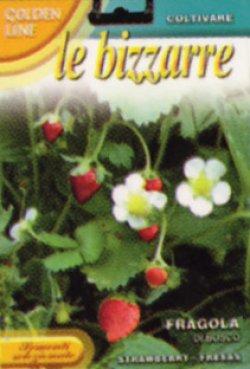 画像1: 森の苺