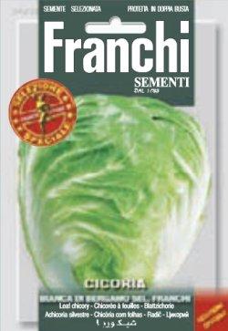 画像1: チコリー・BIANCA DI BERGAMO SEL. FRANCHI