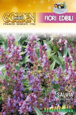画像1: エディブルフラワー・セージ-SALVIA officinalis