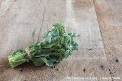 画像1: エアルームブロッコリー・De Cicco Organic(オーガニック種子)