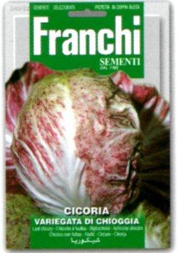 画像1: チコリー・VARIEGATA DI CHIOGGIA