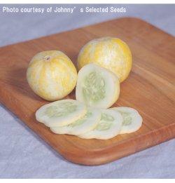 画像1: キュウリ・LEMON CUCUMBER(オーガニック種子)