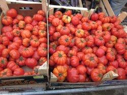画像3: イタリアントマト・COSTOLUTO DI PARMA