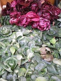 画像2: リーフチコリー・グルモロロッサ・ヴェルデ(ミックス種子)