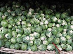 画像2: 芽キャベツ-ブリュッセルスプラウト・ロングアイランド