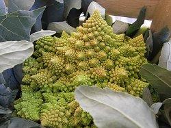 画像4: カリフラワー・ロマネスコ(黄緑サンゴ)