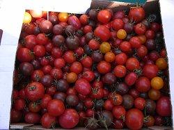 画像2: トマト・BLACK CHERRY(オーガニック種子)