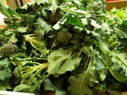 画像2: FRANCHI社-イタリア野菜の種【ブロッコリー・CALABRESE(早生種)】