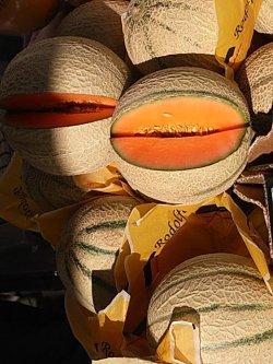 画像2: イタリアンメロン・Cantalupo di Charentais【固定種】