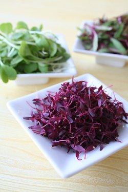 画像4: マイクロリーフ・GARNET RED AMARANTH【固定種・オーガニック種子】