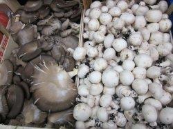 画像2: PRATAIORO Cultivated Button Mushrooms