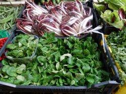 画像2: FRANCHI社-イタリア野菜の種【マーシュ・D'OLANDA A SEME GROSSO】