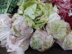 画像2: FRANCHI社-イタリア野菜の種【チコリー・LUSIA PRECOCE】