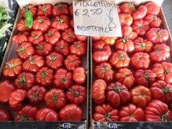 画像2: イタリアントマト・フィオレンティーノ【固定種/支柱・必要】