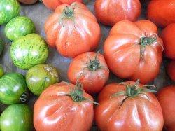 画像3: トマト・Liguria【固定種/支柱・必要】