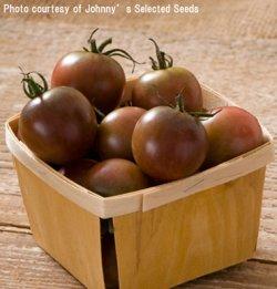 画像1: チェリートマト・BLACK CHERRY(オーガニック種子)【支柱・必要】