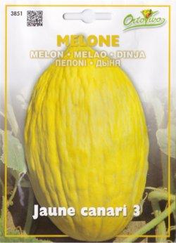 画像1: イタリアンメロン・Jaune canari 3【固定種】