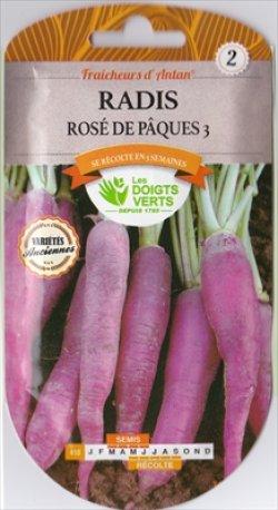 画像1: ラディッシュ・Radis rose de Paques【固定種】