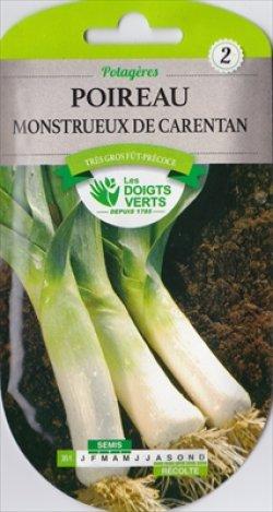 画像1: リーキ・Giant Carentan