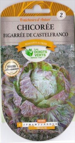 画像1: チコリー・sauvage variegata di Castelfranco