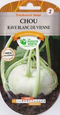 画像1: コールラビ・Vienne bianco【固定種】