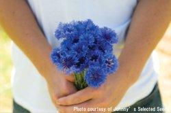画像1: エディブルフラワー・コーンフラワー-Florist Blue Boy
