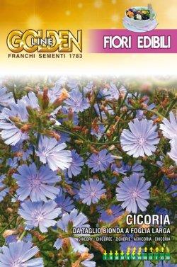 画像1: エディブルフラワー・チコリー-BIONDA A FOGLIE LARGHE