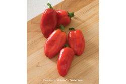 画像2: スイートペッパー・LUNCHBOX RED【固定種・オーガニック種子】