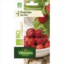 画像1: イチゴ・フレーズ デ ボワ(森のいちご)-Fraisier des bois bio[オーガニック種子]
