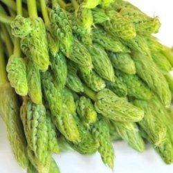 画像2: アスパラガス・Wild Asparagus-ワイルドアスパラガス【固定種】