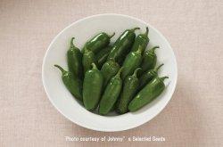 画像1: ホットペッパー・ハラペーニョ-Early Jalapeno(オーガニック種子)【固定種】
