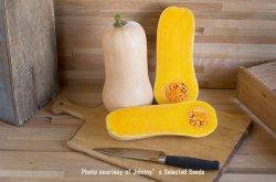 画像1: 食用・バターナッツパンプキン・Waldo PMR(F1)【F1品種/オーガニック種子】