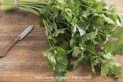 画像1: セルリー・カッティングセルリー-Cutting Celery【固定種】