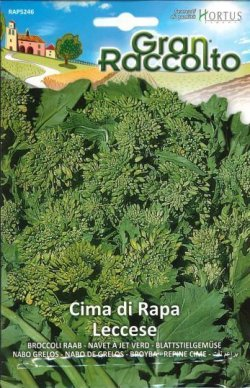 画像1: チーマ・ディ・ラーパ・Leccese(大袋)【固定種/90-100日収穫】