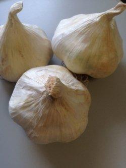 画像1: イタリアニンニク・AGLIO BIANCO 【イタリア-白・球根 / 3球】