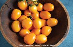 画像1: ハイブリッドソーストマト・Sunrise Sauce(F1)[F1種/支柱・不要]