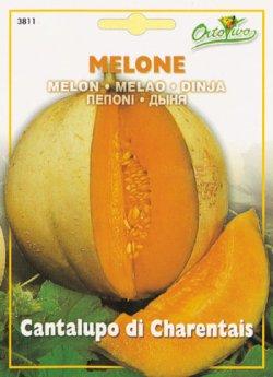 画像1: イタリアンメロン・Cantalupo di Charentais【固定種】