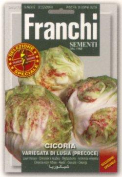 画像1: FRANCHI社-イタリア野菜の種【チコリー・LUSIA PRECOCE】