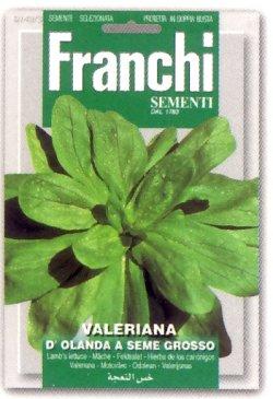 画像1: FRANCHI社-イタリア野菜の種【マーシュ・D'OLANDA A SEME GROSSO】