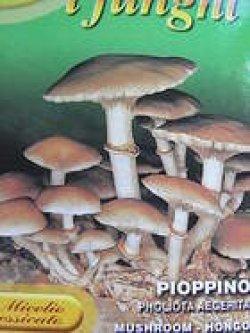 画像1: PIOPPINO Pholiota Aegerita
